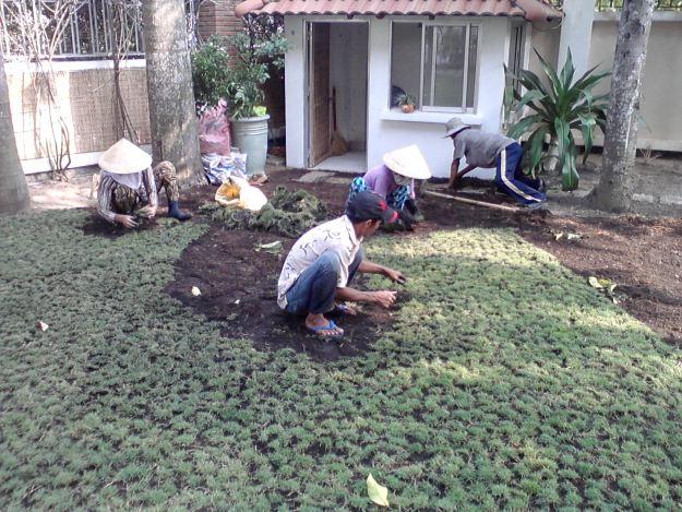 Kết quả hình ảnh cho Dịch vụ chăm sóc cây cảnh sân vườn theo yêu cầu